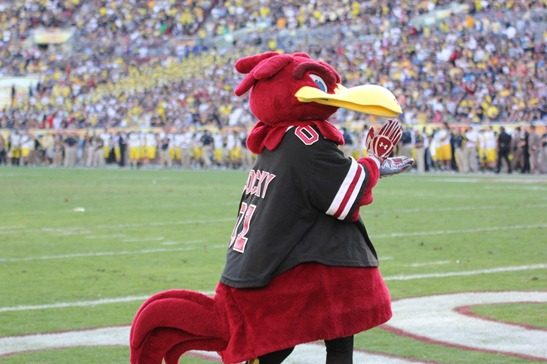 Cocky | 2013 Outback Bowl